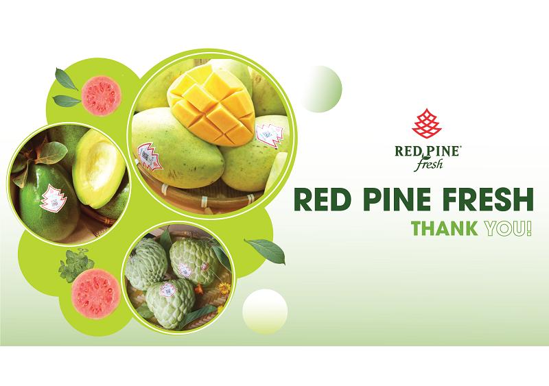 công ty phân phối nông sản red pine fresh trái cây chất lượng