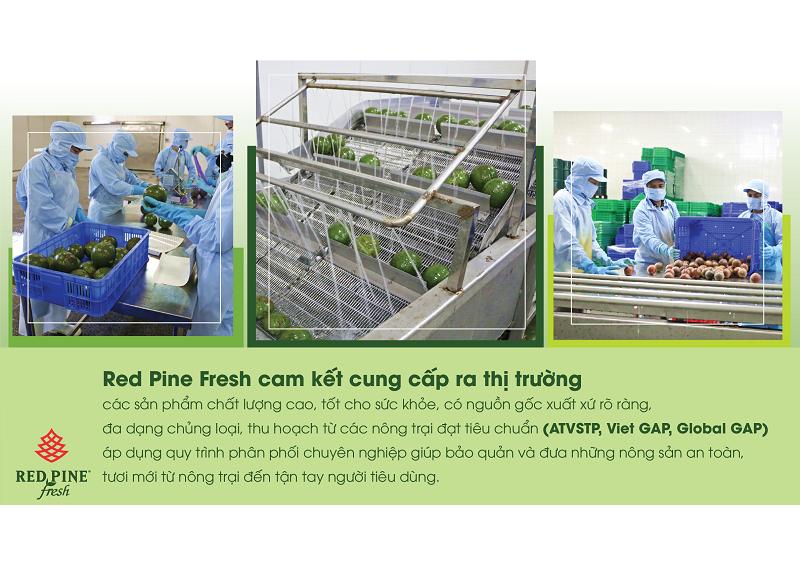 công ty phân phối nông sản red pine fresh