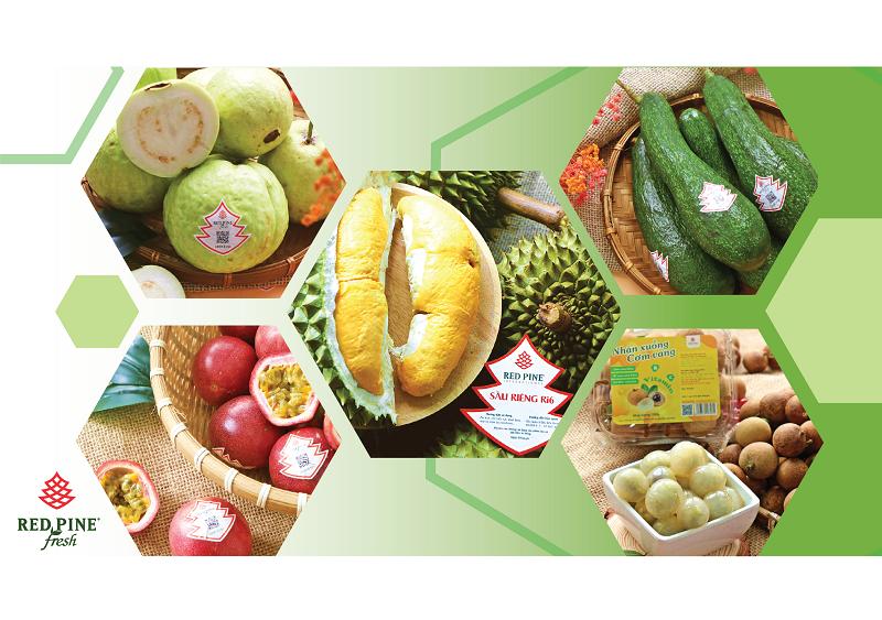 phân phối nông sản Việt